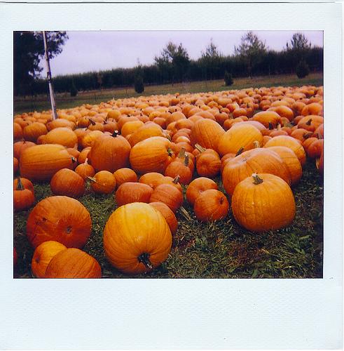 pumpkins_large